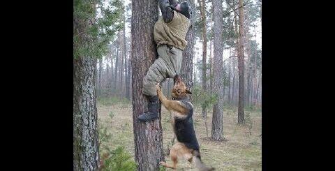 Нападения животных на людей Новые, Лучшие Приколы Funny fails,