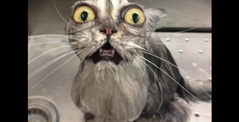 Приколы про животных. Смешные кошки+животные.