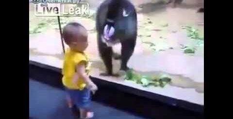 Приколы с обезьянами.