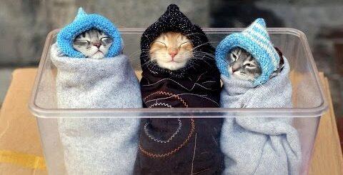 СМОТРЕТЬ ВСЕМ!!! Приколы с котами. Самое смешное видео с котами. Подборка приколов.