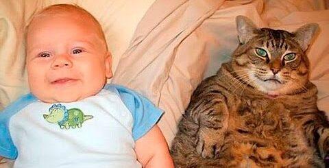 Смешные коты и дети: видео приколы c детьми, смотреть видео приколы про детей!