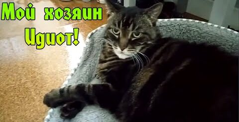 "Мой хозяин Идиот! || Приколы 2015 ""ЮМОР MAX"""