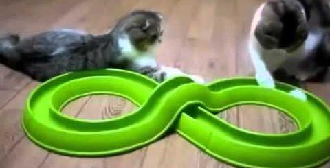 Приколы! подборка СМЕШНОГО видео котов! Кумедні коти 20хв. сміху! Funny Cats Compilation 20 min