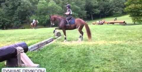Прикол Нерешительная лошадь (конь) (Лучшие приколы 2015)